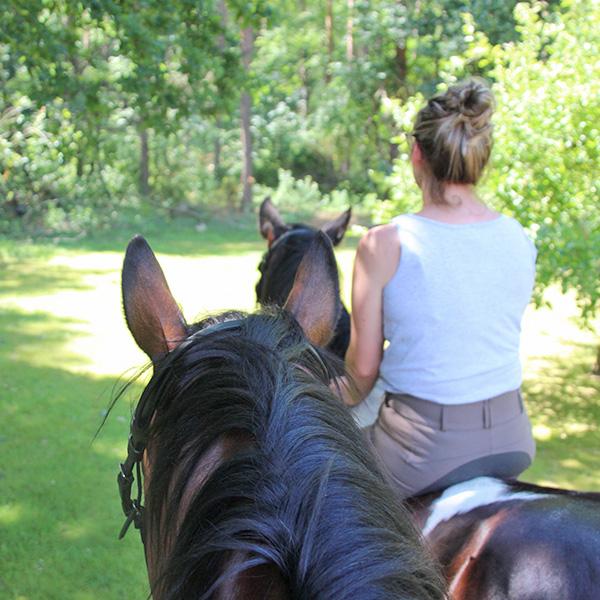 Melanie Wittockx - Coach: Therapie met paarden - Paardengewenning
