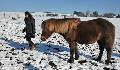 Melanie Wittockx - Coach: Therapie met paarden - Teamcoaching met paarden