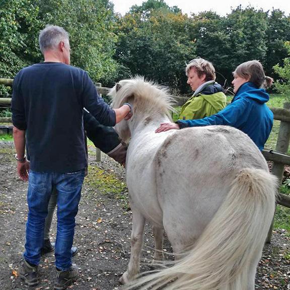Melanie Wittockx - Teamcoaching met paarden