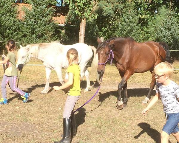 Melanie Wittockx - Paardenatelier voor kids